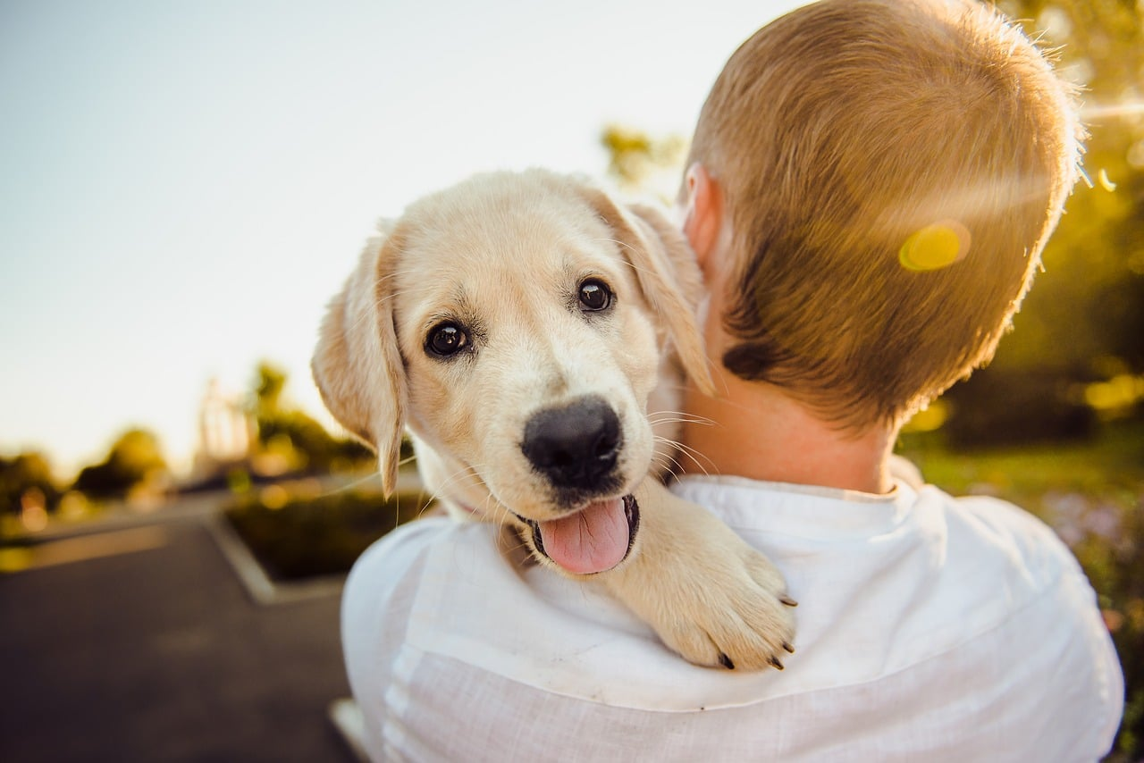 how to stop a dog from whining when you leave